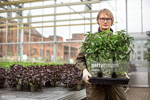 Male gardener working in greenhouse