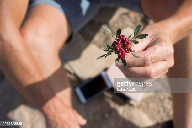 male hand holding a small flower - 1 minute 50 ストックフォトと画像