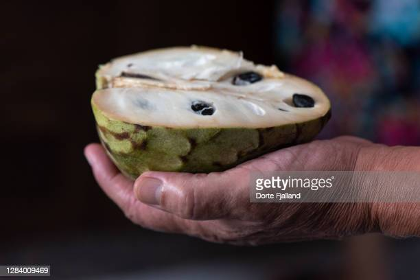 a male hand holding half a cherimoya fruit - dorte fjalland stock pictures, royalty-free photos & images