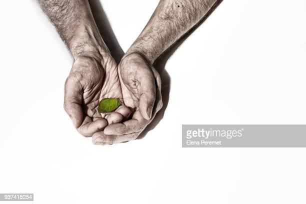 Male hands holding a green leaf on a white background, a symbol of Earth Day