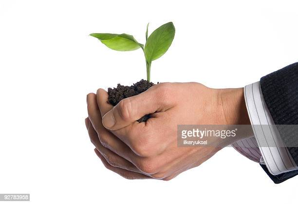 Male hands holding small plant