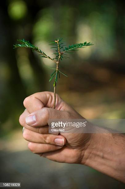 Male Hand's Holding Young Tree Sapling Outside