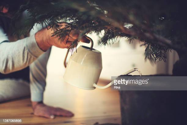 male hands water a potted christmas tree - christmas tree stock pictures, royalty-free photos & images