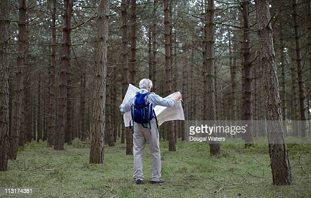 Male hiker in forest looking at map.