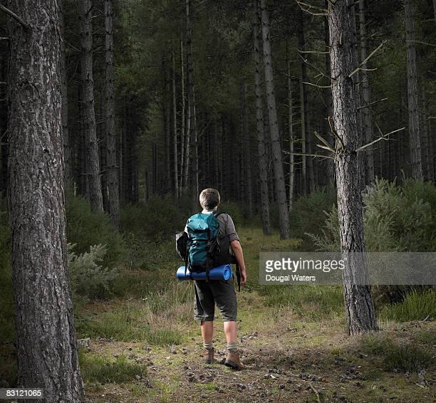 male hiker walking into forest. - short photos et images de collection