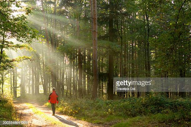 male hiker walking on path in pine forest, rear view - mid distance stock pictures, royalty-free photos & images