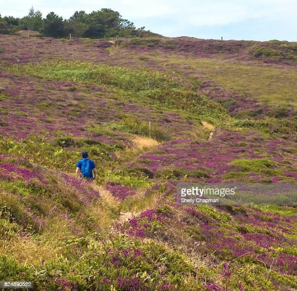 Male hiking along North Cornish trail, Cornwall, England