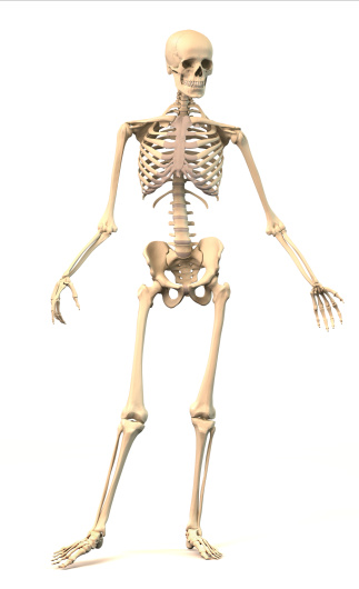 Male Human skeleton, in dynamic posture, front view. 476190083