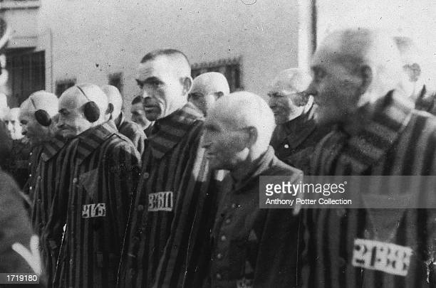 Male inmates wearing striped prison uniforms with triangular chest patches and numbers stand in rows before Nazi officers at a concentration camp...