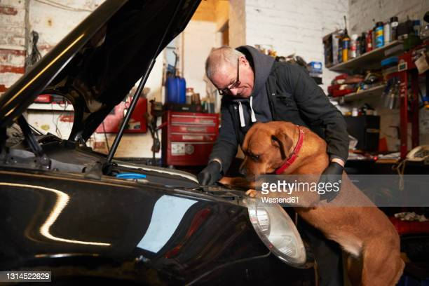 male mechanic repairing car while looking at dog in garage - animal stock pictures, royalty-free photos & images