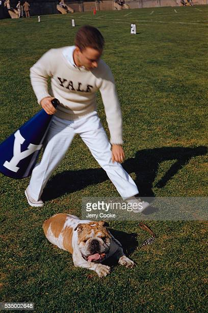 A male member of Yale University's cheer squad walks over to the football mascot bulldog Handsome Dan in the Yale Bowl football stadium