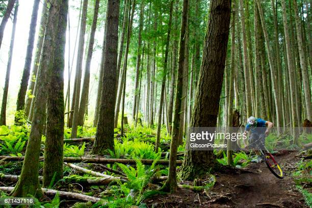 A male mountain biker rides a small jump on a downhill trail in a deep forest in British Columbia, Canada.