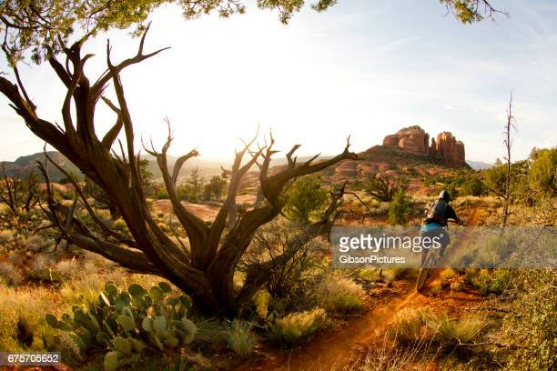 a male mountain biker rides quickly down a popular singletrack trail in sedona, arizona, usa at the end of the day. - arizona stock photos and pictures