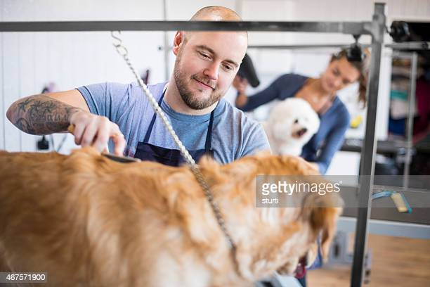 male pet grooming staff grooming dogs.