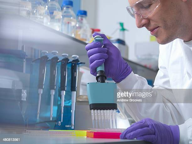 male researcher using multi pipette in lab - purple glove stock pictures, royalty-free photos & images