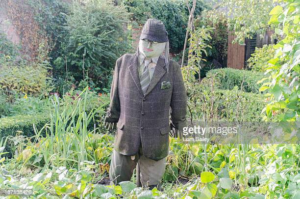 male scarecrow looks out in garden - scarecrow faces stock photos and pictures