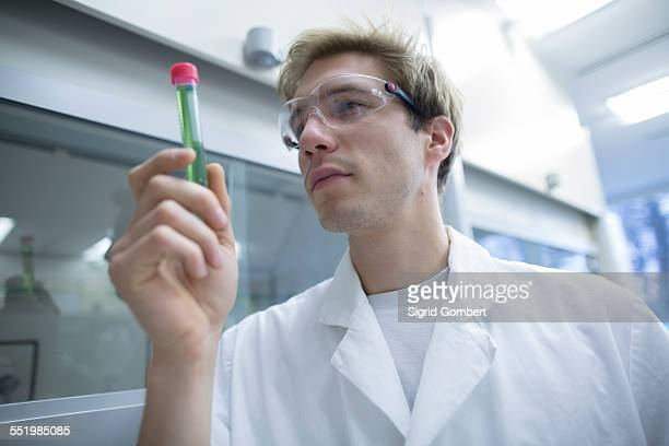 male scientist looking test tube in lab - sigrid gombert stock-fotos und bilder