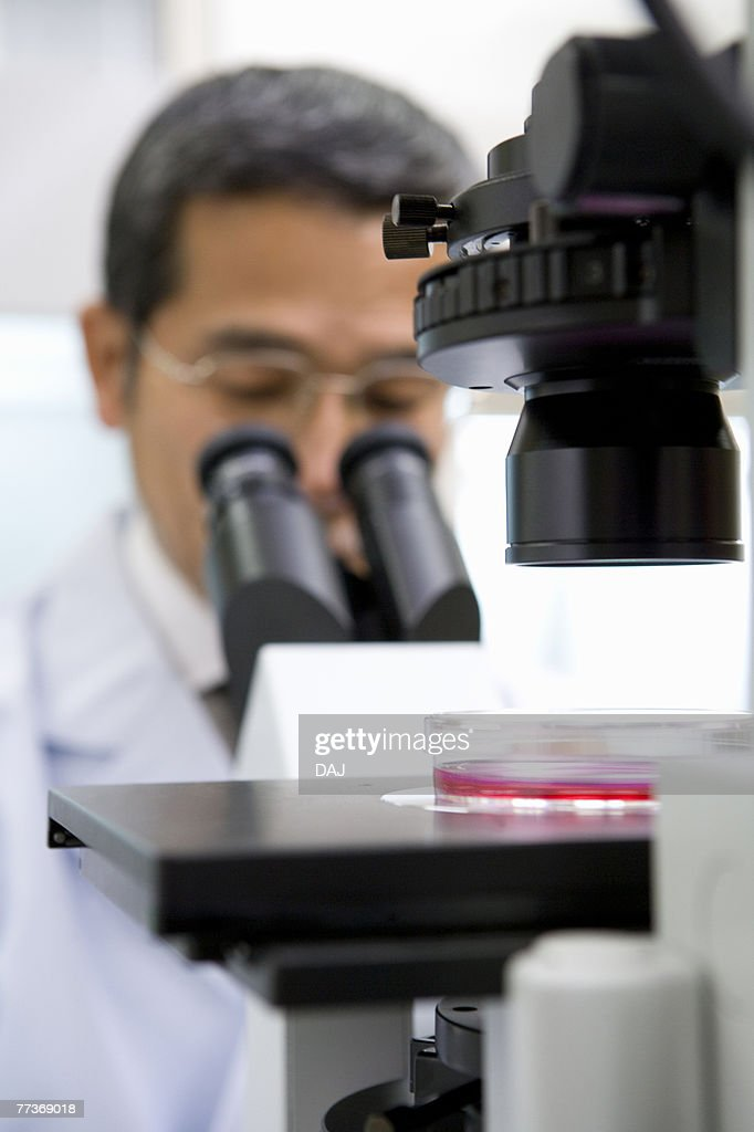 Male scientist looking through a microscope, petri dish with culture in foreground, front view : Stock Photo