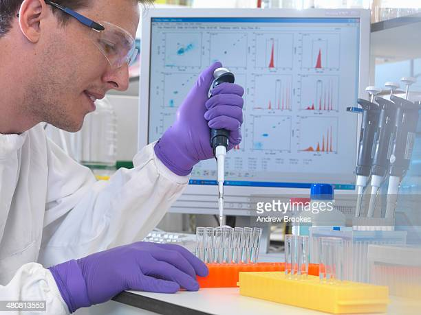 male scientist pipetting sample into test tubes for analysis of cell population - purple glove stock pictures, royalty-free photos & images