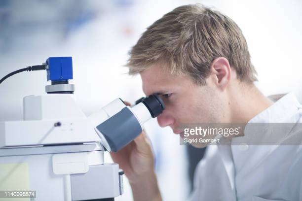 male scientist using microscope in laboratory - sigrid gombert stock pictures, royalty-free photos & images