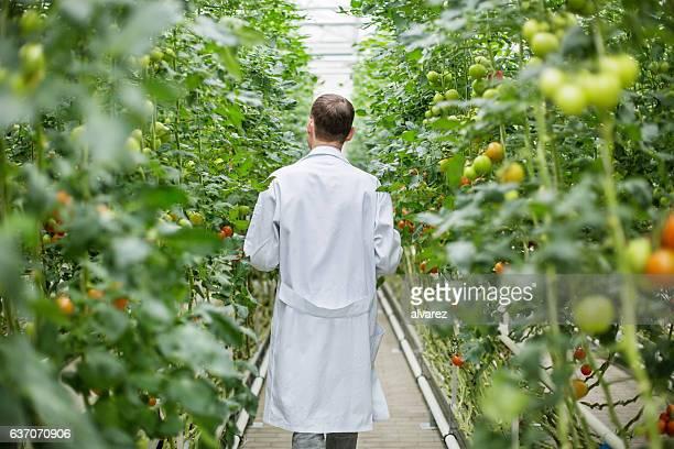 Male scientist walking in greenhouse