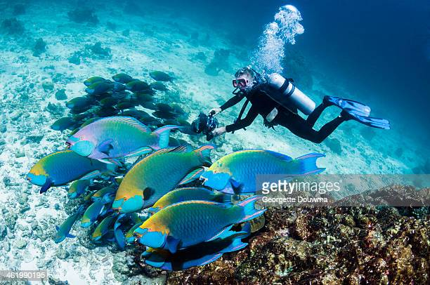 Male scuba diver with camera and parrotfish