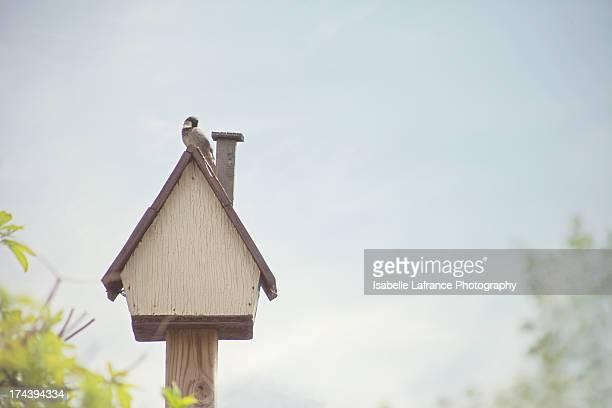 Male Sparrow on top of bird house