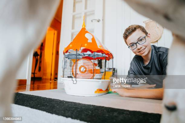 male teenager just having fun with hamster in cage in domestic room - child behind bars stock pictures, royalty-free photos & images