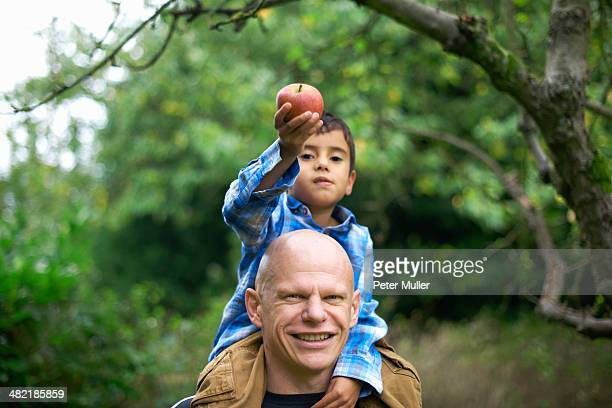 Male toddler holding an apple and sitting on fathers shoulders