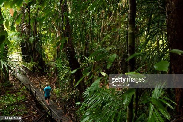 senderismo turístico masculino en el paseo marítimo en la selva - parque nacional fotografías e imágenes de stock