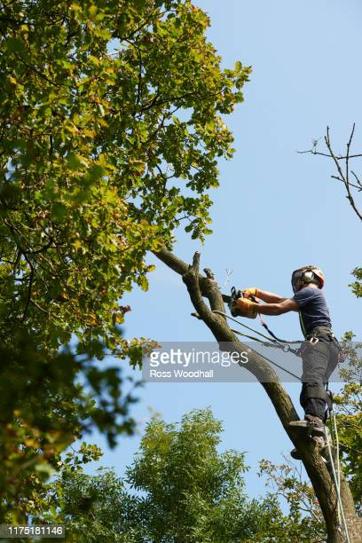 male tree surgeon in tree top sawing tree branch using chainsaw, low angle view - ironbridge shropshire stock pictures, royalty-free photos & images