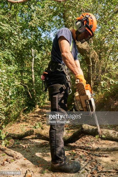 male tree surgeon on woodland path sawing tree branch using chainsaw, low angle view - ironbridge shropshire stock pictures, royalty-free photos & images