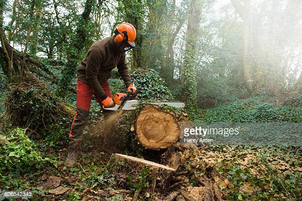 Male tree surgeon sawing tree trunk using chainsaw in forest