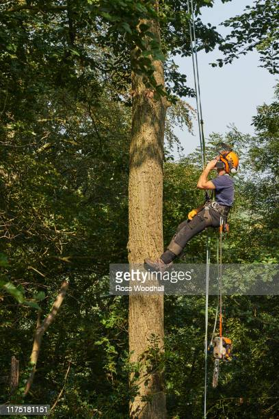 male tree surgeon wearing rope harness moving up tree trunk, low angle view - ironbridge shropshire stock pictures, royalty-free photos & images
