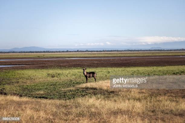 Male waterbuck stands on the edge of an open floodplain on May 28, 2016 at the Gorongosa National Park in Gorongosa. - Passing through the aged faded...