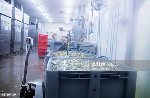 male worker working in organic tofu production factory - sigrid gombert 個照片及圖片檔