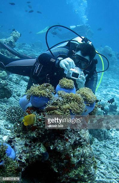 Malediven - Taucher fotografiert unter Wasser Anemonen