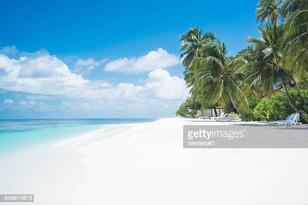 Maledives, Ari Atoll, view to empty dream beach with palms and beach loungers