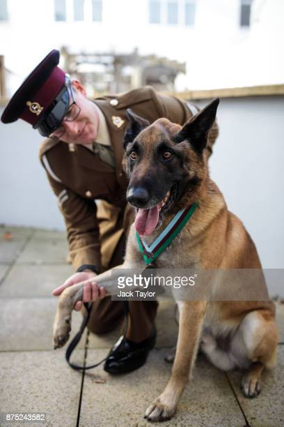 Mali a Belgian Malinois British Military Working Dog wearing the PDSA Dickin Medal and his handler Corporal Daniel Hatley pose for a photograph at...
