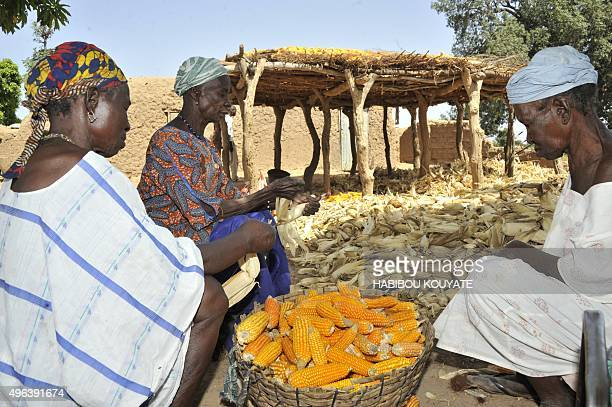 DANIEL Malian Niakoro Coulibaly and other women strip maize of their husk in the village of Kodjan some 60 kilometers west of Bamako on November 6...