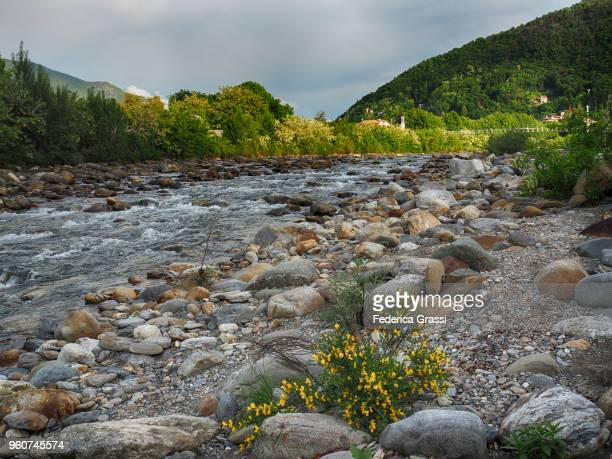Mallard couple sitting on big granite rocks on the riverbed of Torrente Cannobino in Cannobio, Province of Verbano Cusio Ossola, Piedmont Region, Northern Italy.