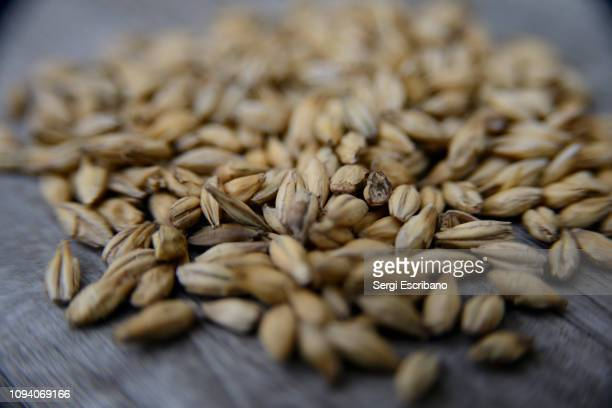 malted barley - barley stock pictures, royalty-free photos & images