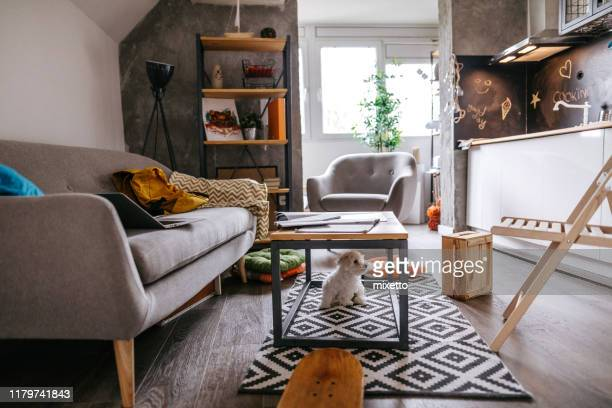 maltese dog under the table at apartment - small apartment stock pictures, royalty-free photos & images