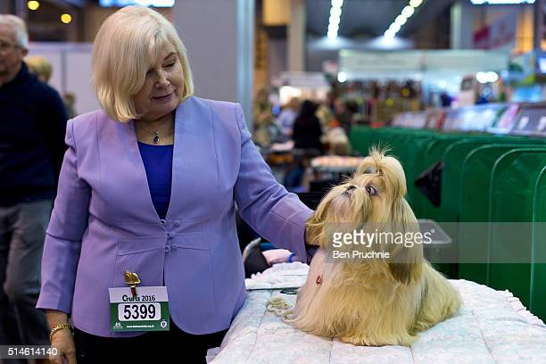 A maltese poses next to its owner on the first day of Crufts Dog Show on March 10 2016 in Birmingham England First held in 1891 Crufts is said to be...