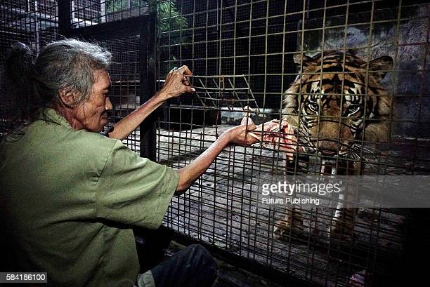 Maman, a zoo keeper playing with Leopard inside the cage in Ragunan zoo during the 'Save our Tigers' campaign for upcoming International Tiger Day on...