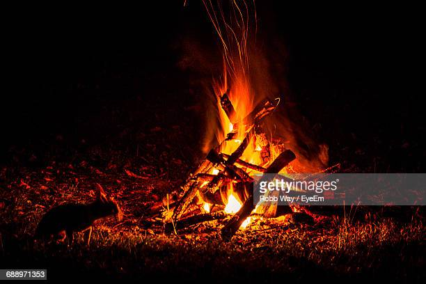 mammal by burning bonfire at night - bonfire stock photos and pictures