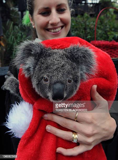 Mammal keeper Hayley Shute cuddles a koala wrapped in a Christmas hat against the unseasonally cold temperatures at the Australian Reptile Park near...