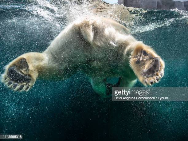 mammal swimming undersea - environmental damage stock pictures, royalty-free photos & images