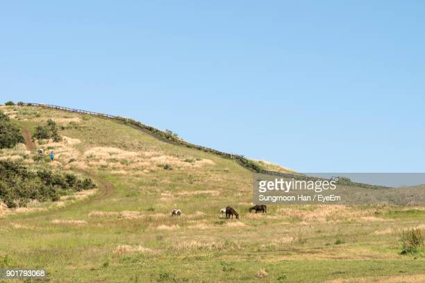 Mammals Grazing On Field Against Clear Sky