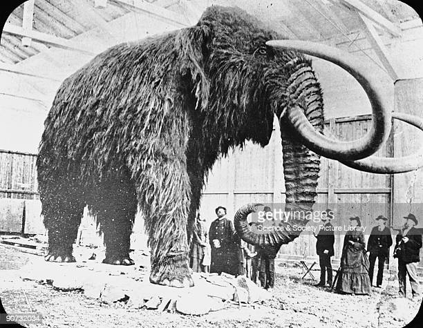 Mammoth found in ice in Siberia 19th Century